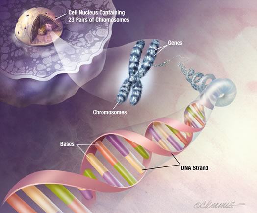 How genetic engineers manipulate genes april 11, 2010